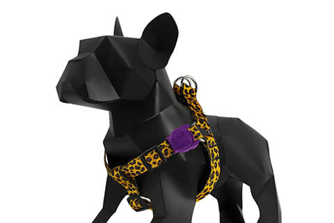 zeedog_cachorro_pet_peitoral_honey