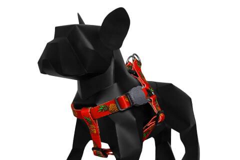 zeedog_cachorro_pet_peitoral_tropicalia
