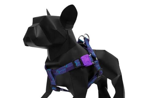 zeedog_cachorro_pet_peitoral_royale