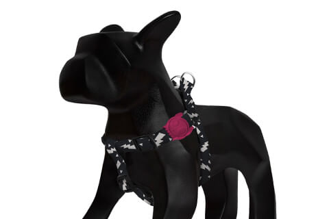 zeedog_cachorro_pet_peitoral_flash_raios