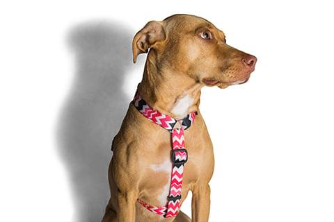 zeedog_cachorro_pet_peitoral_h_maui_zigzag_hover