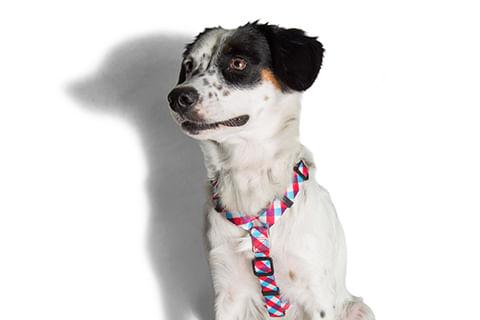 zeedog_cachorro_pet_peitoral_h_gummy_xadrez_hover