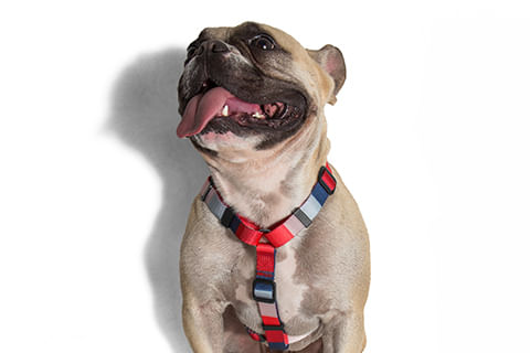 zeedog_cachorro_pet_peitoral_h_oregon_listras_hover
