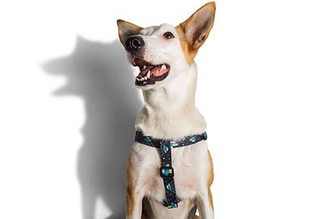 zeedog_cachorro_pet_peitoral_stepin_area51_alien_active