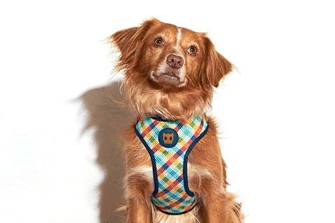 zeedog_cachorro_pet_peitoral_mesh_plus_phantom_xadrez_active