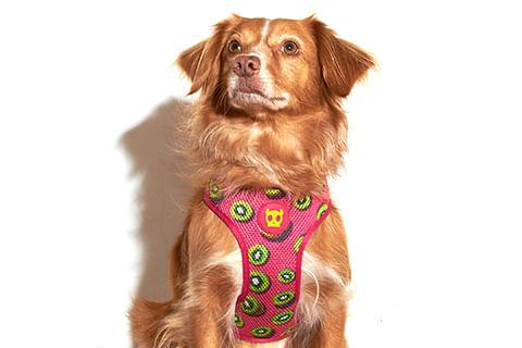 zeedog_cachorro_pet_peitoral_mesh_plus_juice_kiwi_active