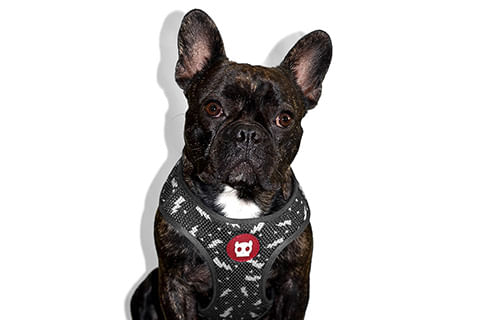 zeedog_cachorro_pet_peitoral_mesh_plus_flash_raio_active