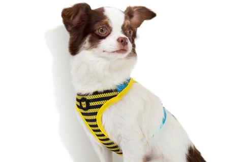 zeedog_cachorro_pet_peitoral_mesh_plus_buzz_abelha_listras_active