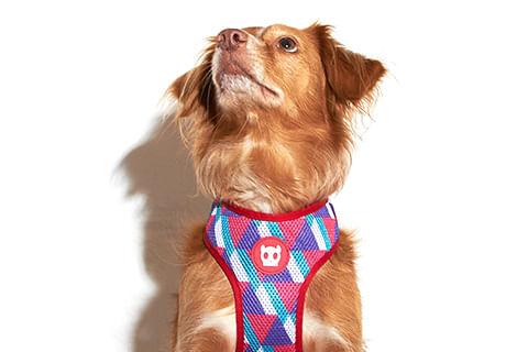 zeedog_cachorro_pet_peitoral_mesh_plus_adria_active