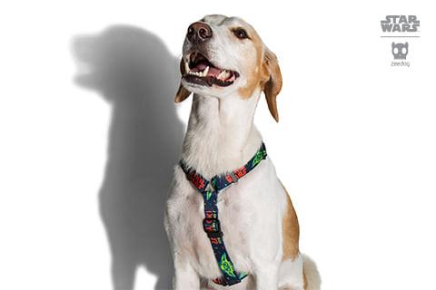 peitoral-h-para-cachorros_star-wars_yoda_zeedog_cachorro_pet_hover