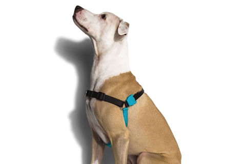 peitoral-para-cachorros-antipuxao_monoby_preto_zeedog_cachorro_pet_hover