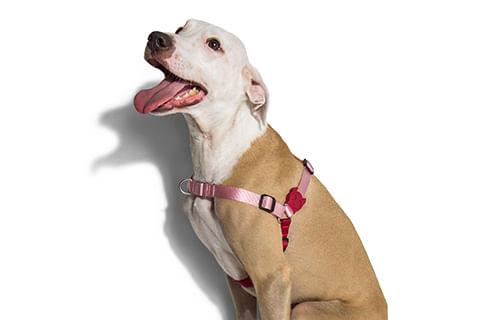 peitoral-para-cachorros-antipuxao_moma_rosa_zeedog_cachorro_pet_hover