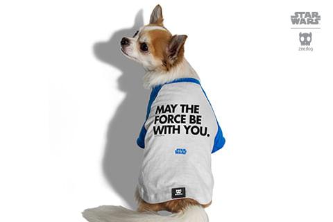camiseta-para-cachorros_star-wars_azul_may-the-force_zeedog_cachorro_pet_hover