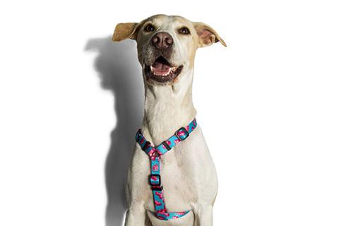 peitoral-para-cachorros-h_tetris_blocos_zeedog_cachorro_pet_hover