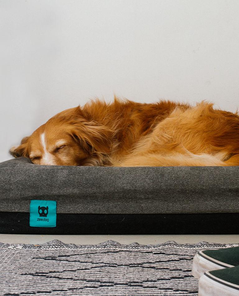 Cachorros - Zee.Dog