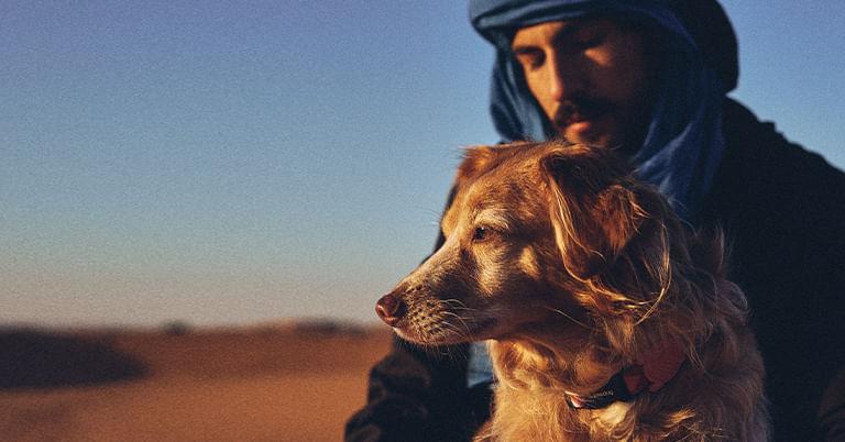 Coleção Marrakesh - Zee.Dog