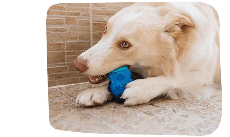 Brinquedo para Cachorros Brainies Brain Freeze - Zee.Dog