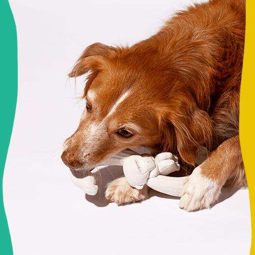 brinquedo para cachorros hooky dooky