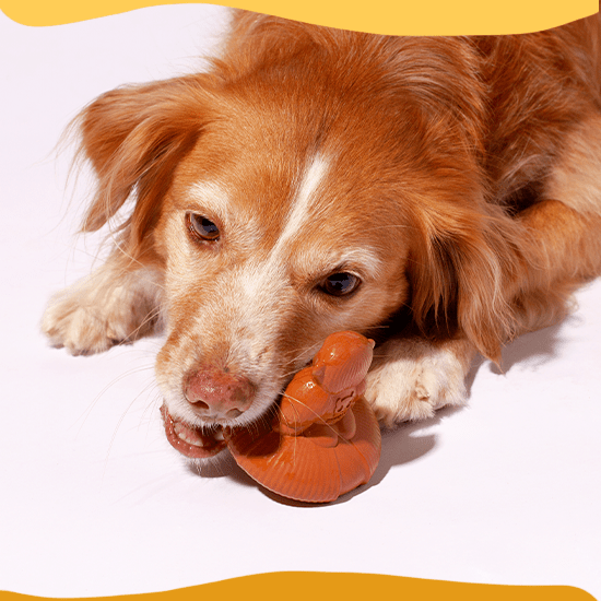 brinquedo para cachorros spinny jimmy