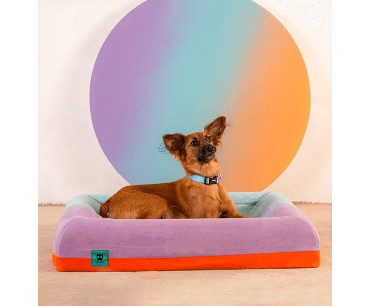 Cachorro na Cama Zee.Bed Gradients Wave