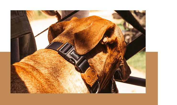 coleira para cachorros patagonia listras zeedog