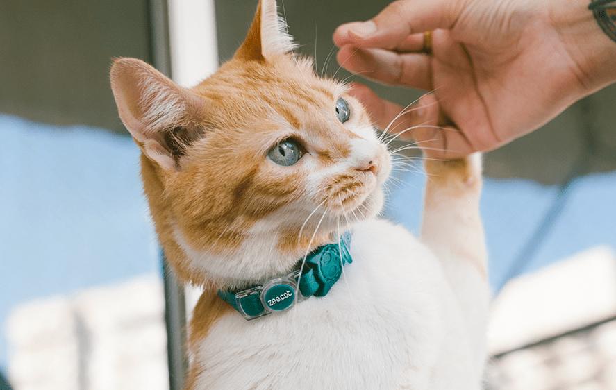 Neopro Coleira para gatos Amazonia - Zee.Dog