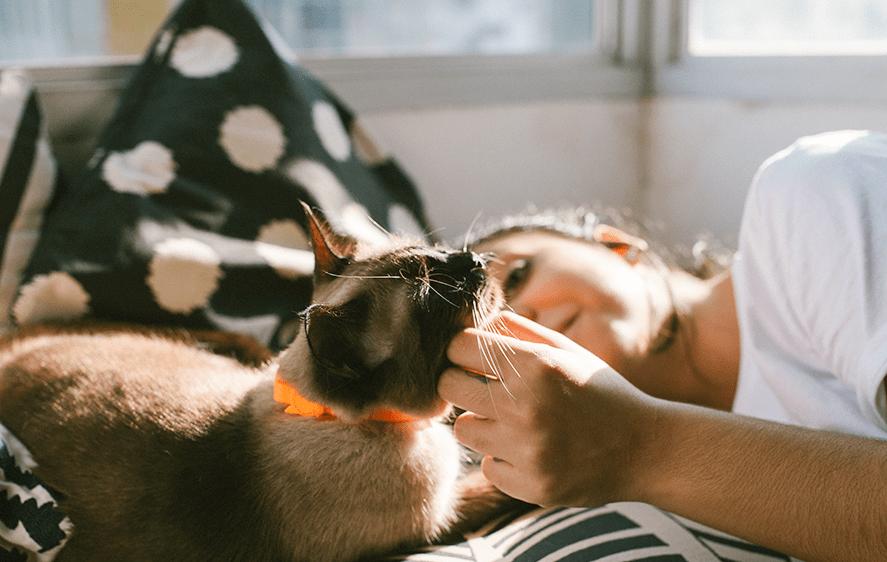 Neopro Coleira para gatos Tangerine - Zee.Dog