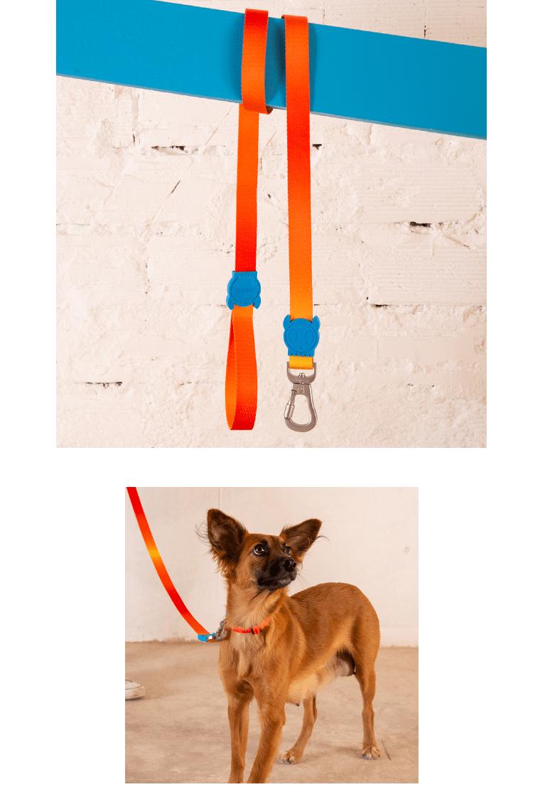 Guia para cachorros Gradients Solaris e cachorro usando a guia