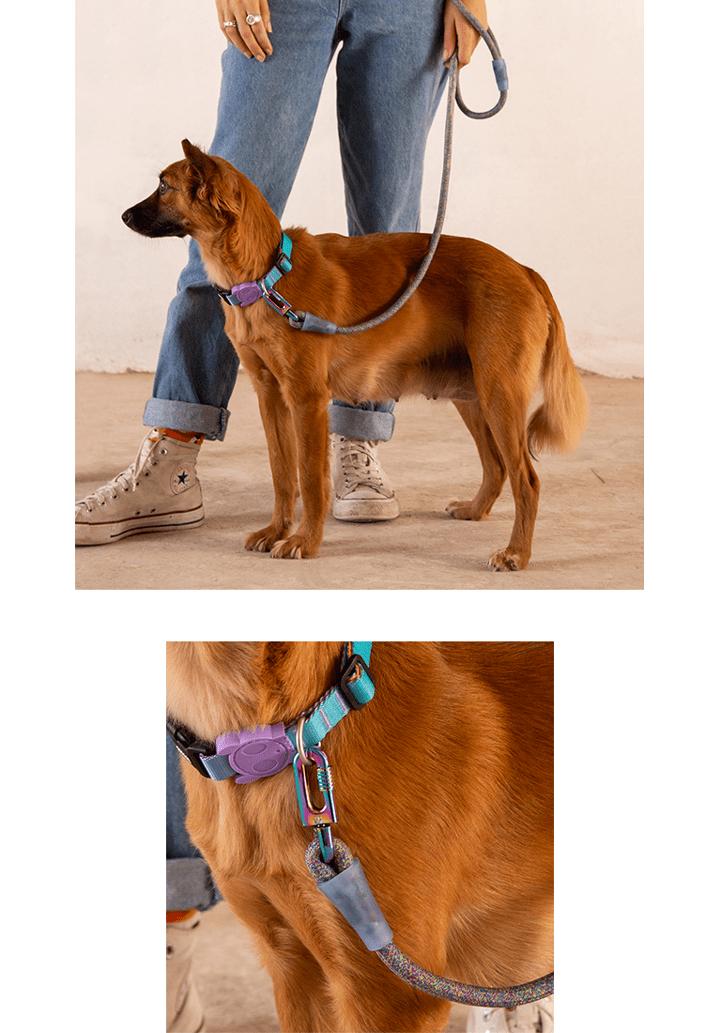 Cachorro usando Guia de Corda com Gancho Gradients Andromeda