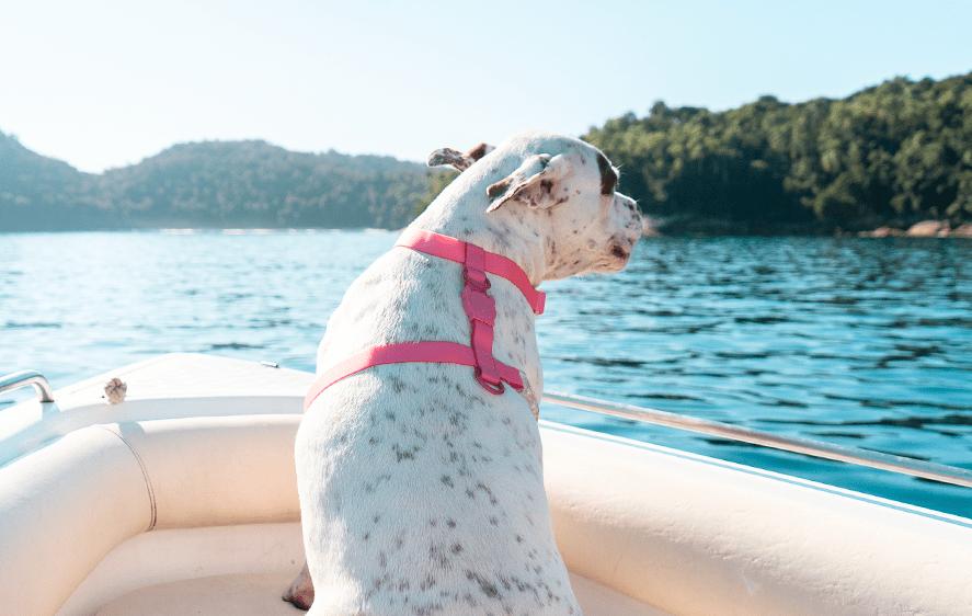 Neopro Guia Bubblegum - Zee.Dog