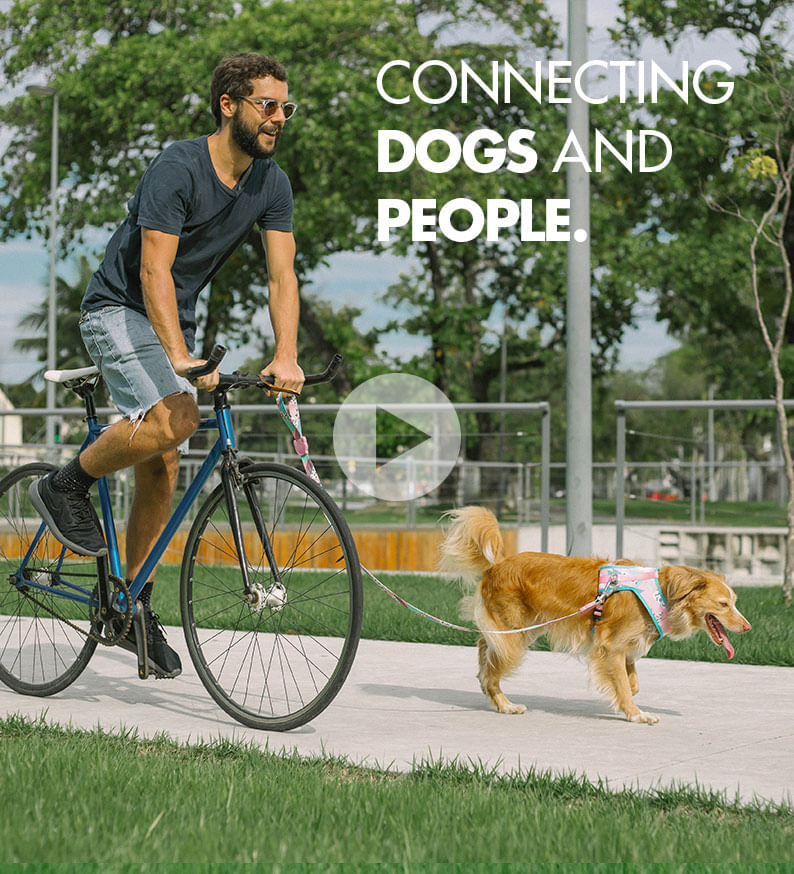 Connecting dogs and people - Zee.Dog