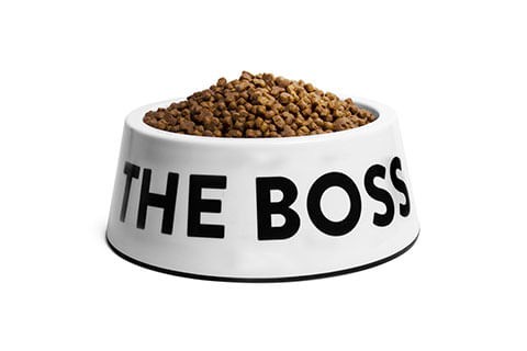 Comedouro-The-Boss