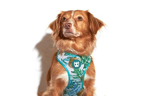 Peitoral-para-cachorros-mesh-plus-McZee