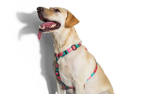 zeedog_cachorro_pet_peitoral_h_lazy_preguica_active