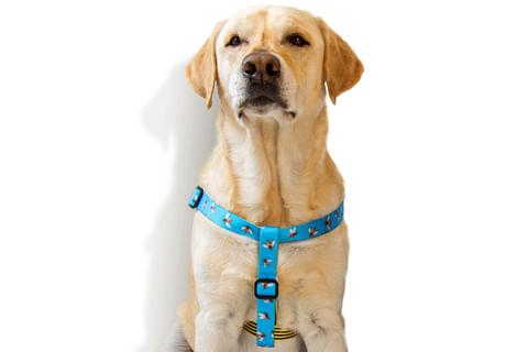 zeedog_cachorro_pet_peitoral_stepin_buzz_abelha_listra_active