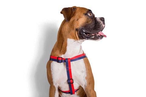 zeedog_cachorro_pet_peitoral_stepin_cadillac_listras_active