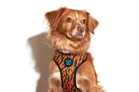 zeedog_cachorro_pet_peitoral_mesh_plus_ayo_tigre_active