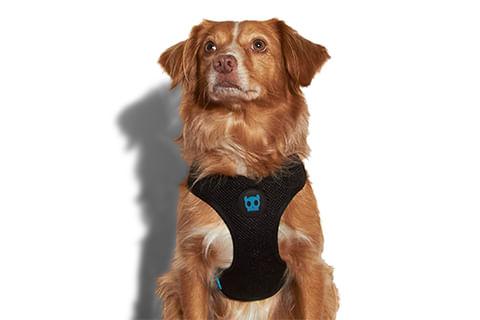 zeedog_cachorro_pet_peitoral_mesh_plus_monoby_active
