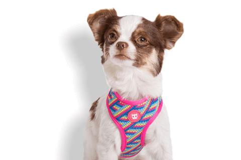 zeedog_cachorro_pet_peitoral_mesh_plus_bowie_listras_active