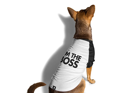 camiseta-para-cachorros_preta_boss_zeedog_cachorro_pet_hover