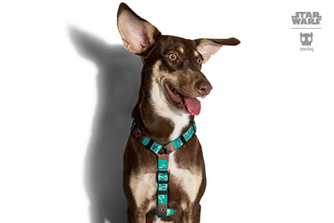 peitoral-h-para-cachorros_star-wars_chewbacca_zeedog_cachorro_pet_hover