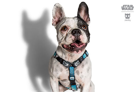 peitoral-h-para-cachorros_star-wars_millennium-falcon-nave_zeedog_cachorro_pet_hover