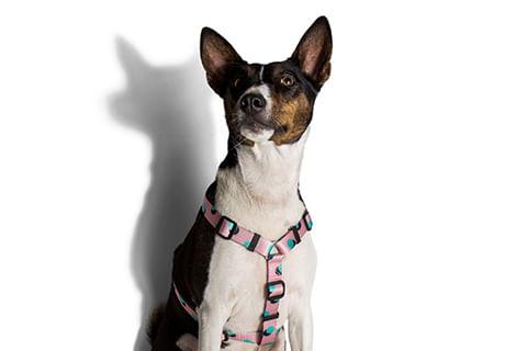 peitoral-para-cachorros_h_polka_bolinhas_zeedog_cachorro_pet_hover_1