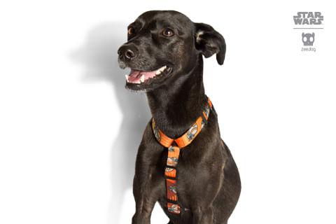 peitoral-para-cachorros-h_star-wars_bb-8_zeedog_cachorro_pet_hover