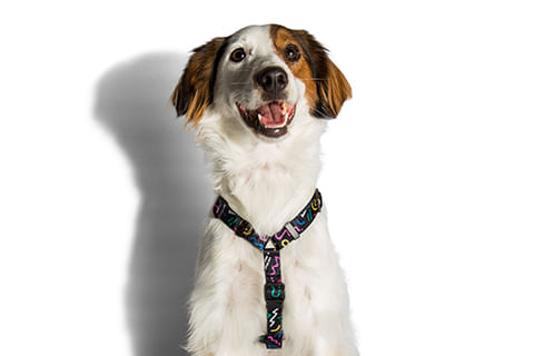 peitoral-para-cachorros-h_kaboom_zeedog_cachorro_pet_hover