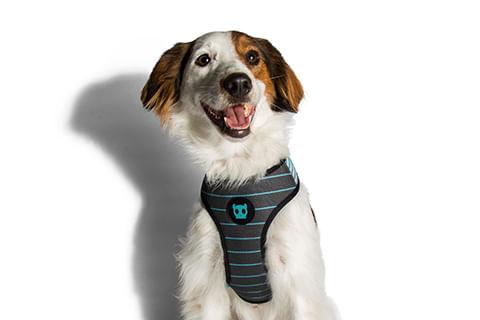 peitoral-para-cachorros_mesh-plus_helsinki_linhas_zeedog_cachorro_pet_hover