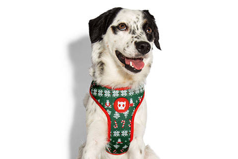 peitoral-para-cachorros_mesh-plus_rudolph_natal_zeedog_cachorro_pet_hover