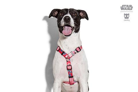 peitoral-h-para-cachorros_star-wars_princesa_leia_zeedog_cachorro_pet_hover