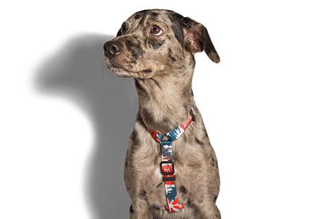 peitoral-para-cachorros_h_fuji_zeedog_cachorro_pet_hover
