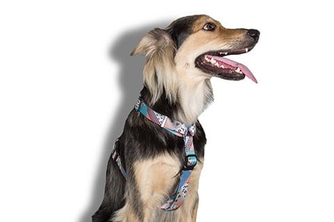 peitoral-para-cachorros_h_memphis_zeedog_cachorro_pet_hover